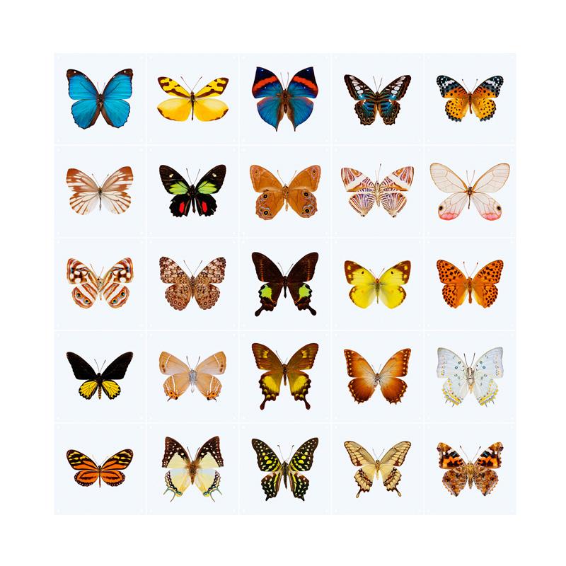 Wanddecoratie met vlinders