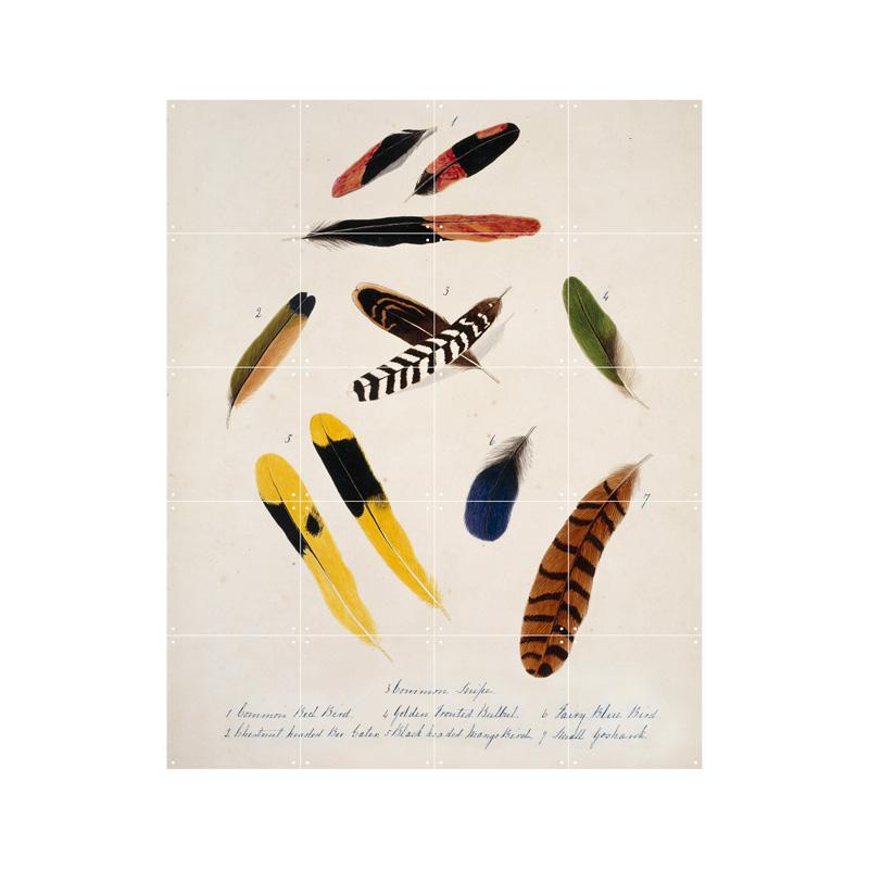 Wanddecoratie van gekleurde veren