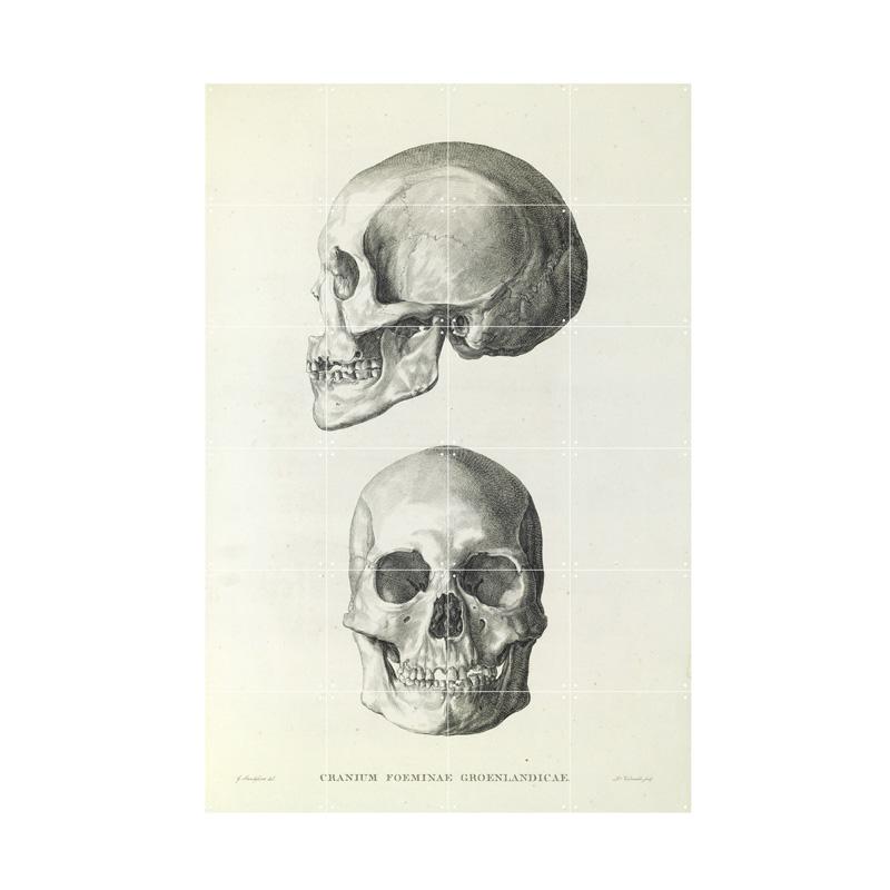 Muurdecoratie van schedels