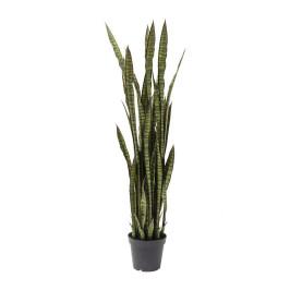 Deco plant vrouwentongen